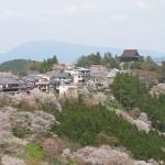 吉野の桜は山一面! wikipediaより