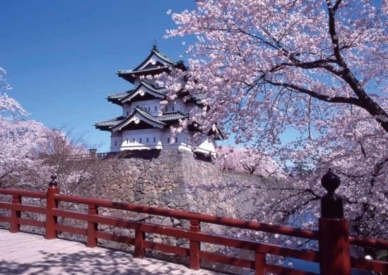 【桜前線通過中】2015年の桜ツアー人気ランキング!?