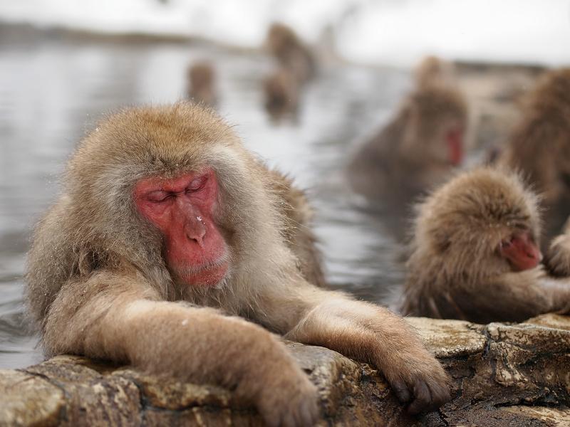 【なんと!】トリップアドバイザー「外国人に人気の観光スポット2015」の結果に驚いた!