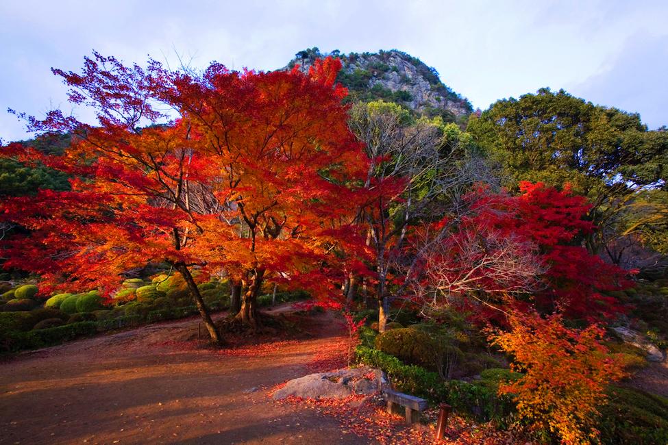 燃えるような朱の紅葉。