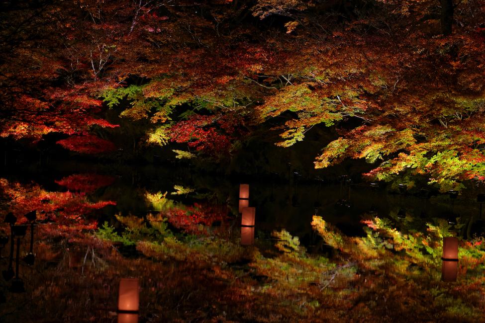水面に映る紅葉・・美しすぎる。