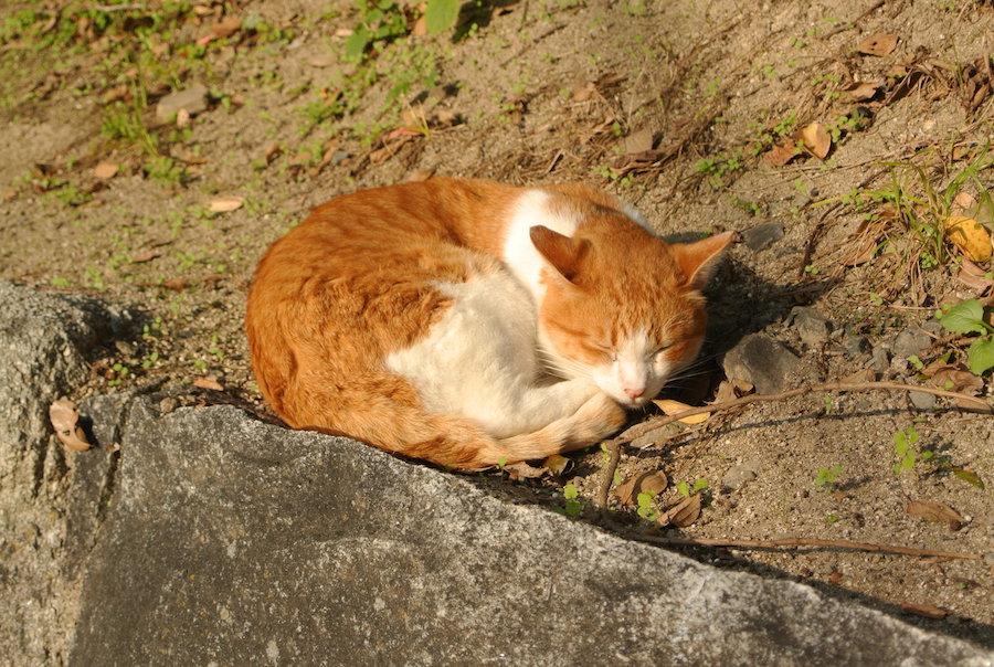 公園の入り口にたたずむネコ。気持ちよさそうに昼寝をしていた。