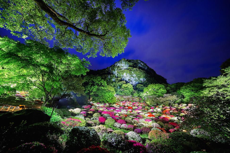 【 これぞ極楽浄土 】佐賀 鍋島藩ゆかりの庭園で九州最大規模の桜ライトアップを満喫!