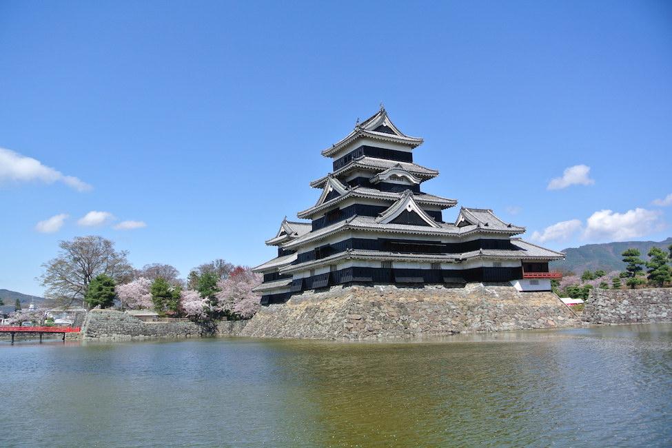 【 弾丸取材 】国宝 松本城の桜が全開じゃー!