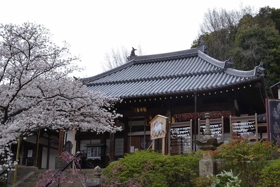 【 三好長慶や飯盛城だけじゃない! 】大阪 大東市の歴史や魅力を学べるマンガが出たって!?