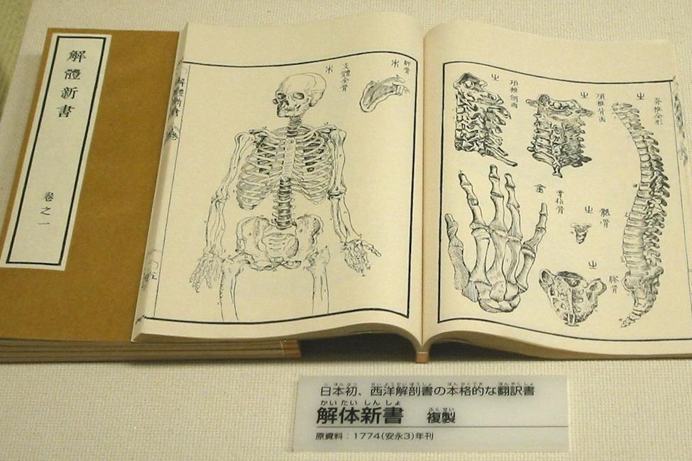 【 暗号解読の偉業 】日本初の西洋医学書「解体新書」のウラ話はまるで映画
