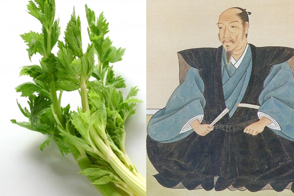 【 セロリを日本に持ち込んだのは清正? 】戦国大名たちが考案・発祥の食べ物まとめ